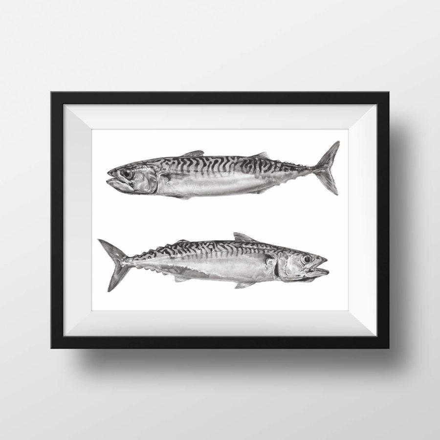 Cornish Mackerel - framed