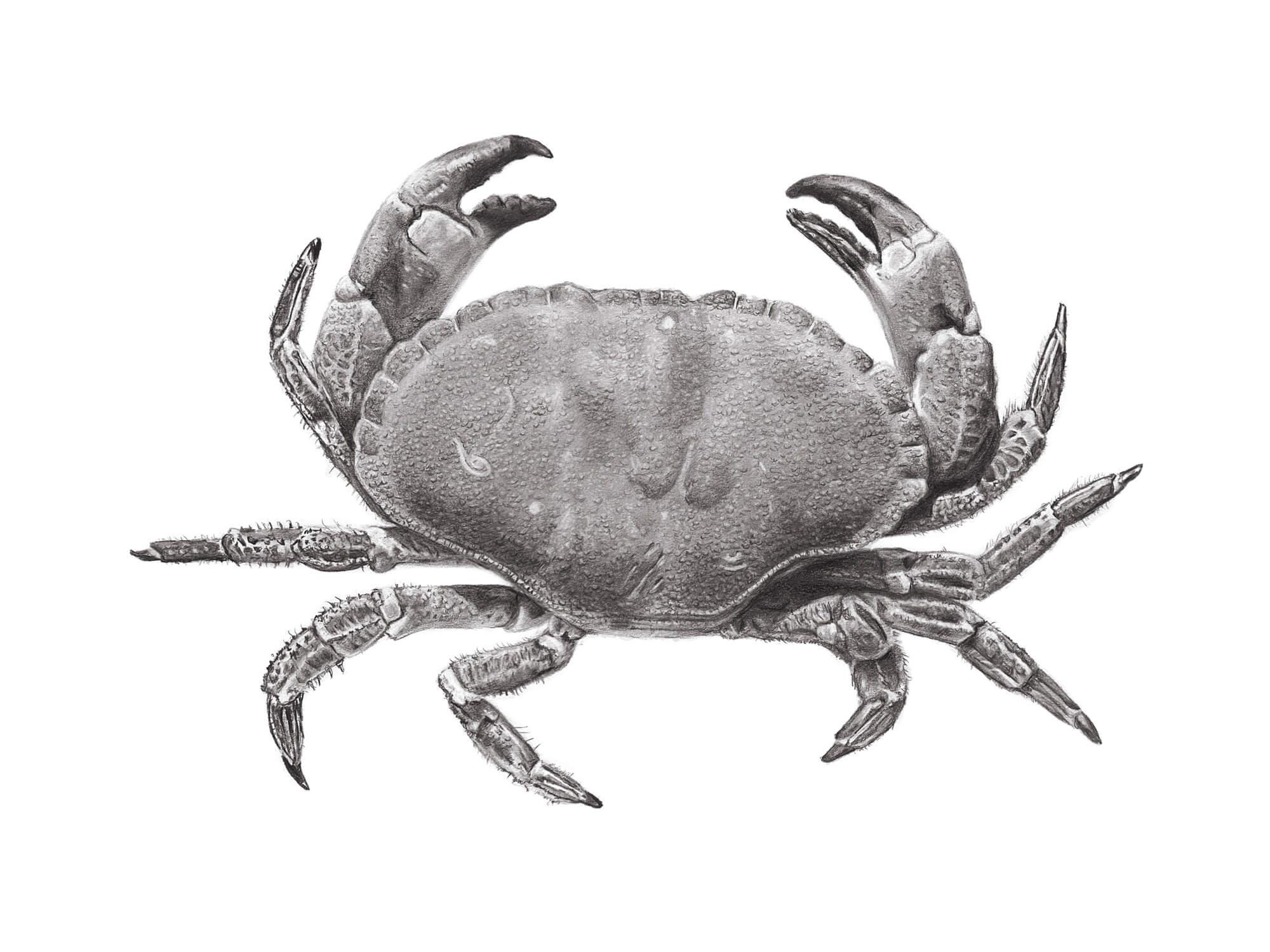 Crab_FINAL