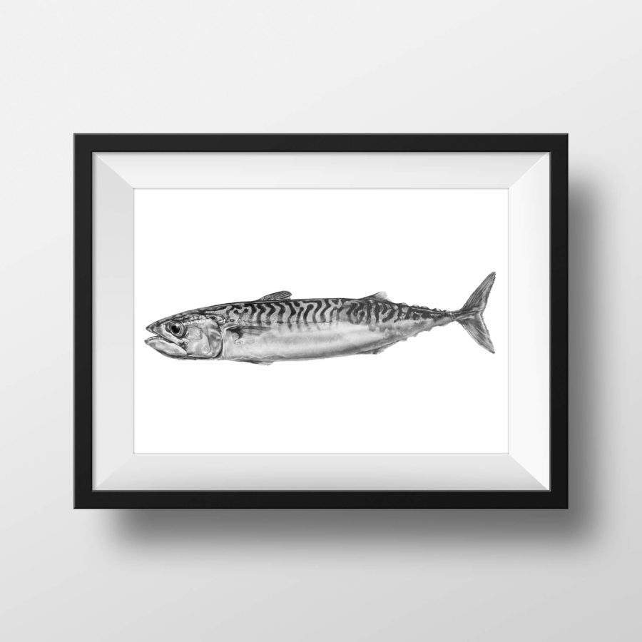 Cornish Mackerel 1 - framed