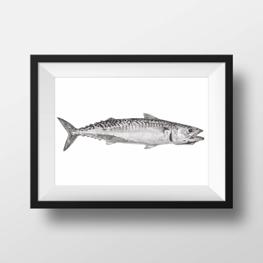 Cornish Mackerel 2 - framed