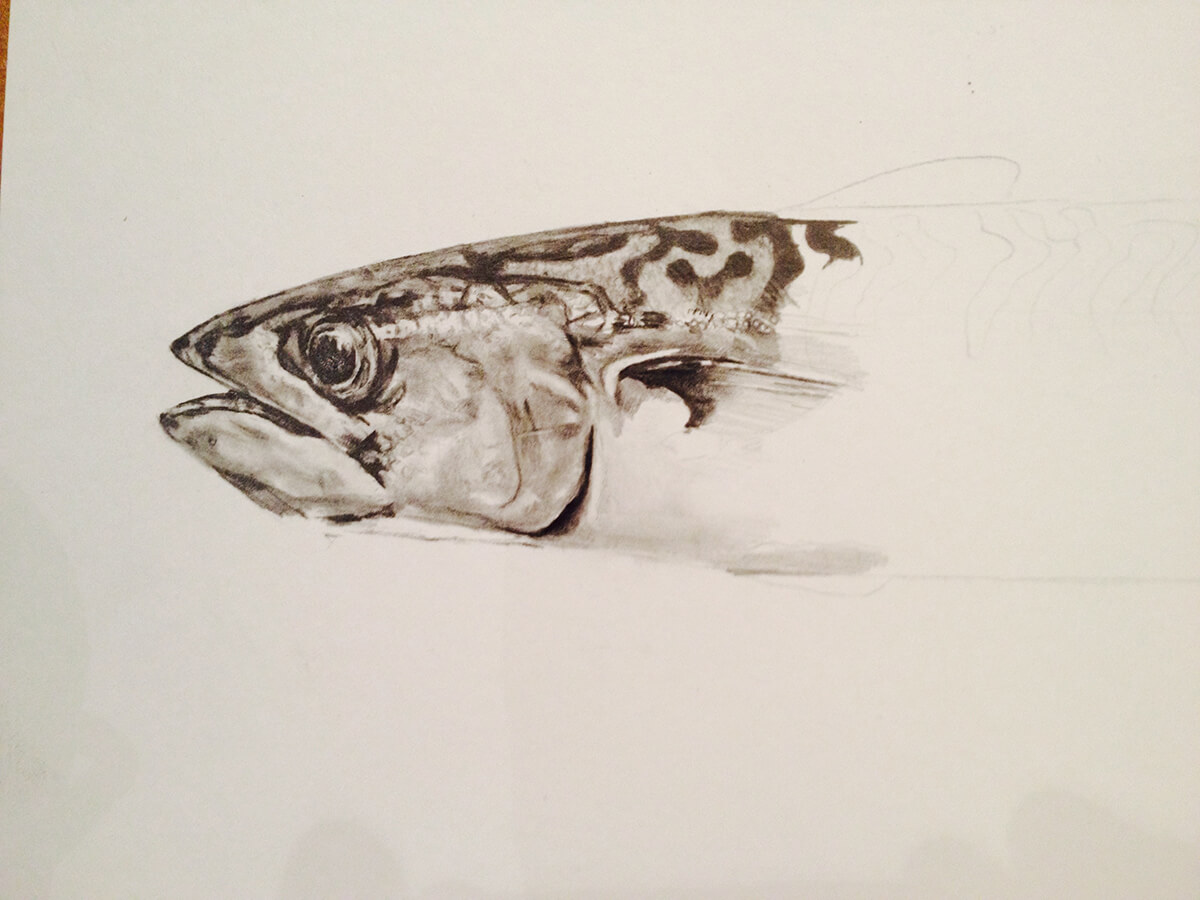 MACKEREL_WIP_1