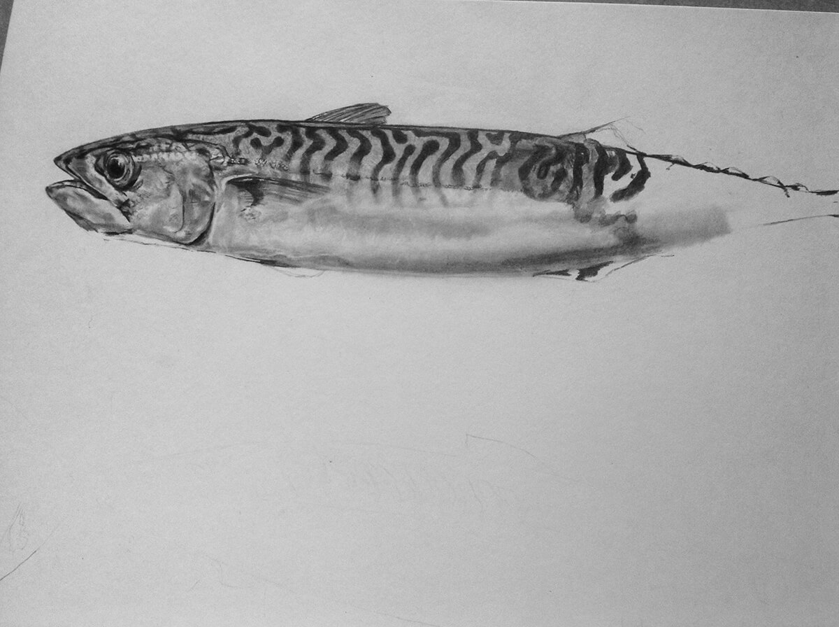 MACKEREL_WIP_2