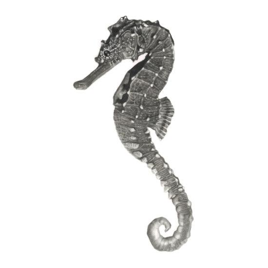 seahorse_drawing